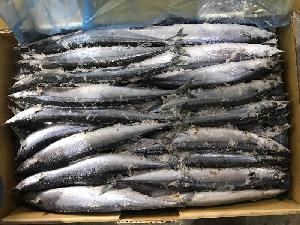 Seafrozen Saury WR 2#