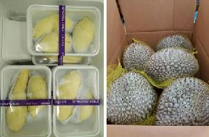 High   quality  fresh durian fruit with good price