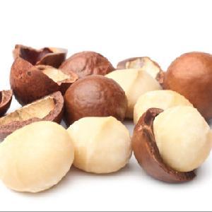 macadamia nuts in shell Top quality healthy Dried Organic Macadamia Nuts