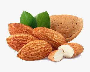Grade A Almond Nuts / Raw Natural Almond Nuts / Organic
