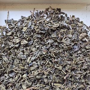 Gunpowder green tea 9575