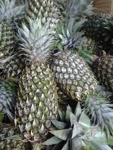 Best Price  Fresh   Pineapple  Vietnam PHU HAI MINH