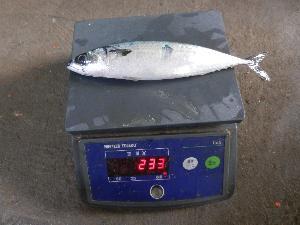 Hot Sales  Frozen   Fish  Buyers  Frozen   Whole  Mackerel  Fish  For  Whole sale