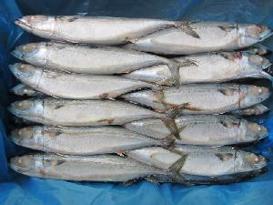 Best  Quality  Chinese Mackerel Whole Round Frozen Mackerel Fish For Sale
