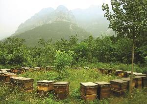 Bee Venom Powder Apitoxin bulk wholesale cheap price