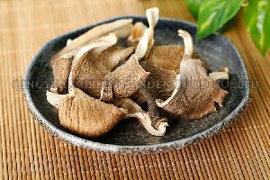 (Oyster Mushroom)