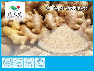 Ginger   oil  & Extract