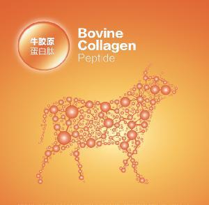 Hydrolyzed Bovine Collagen