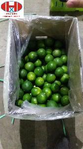 Fresh  Lemon in Viet Nam