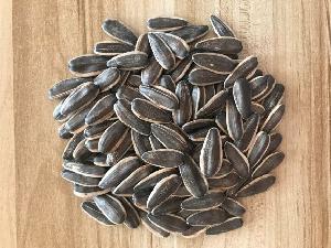 New Crop Black Sunflower Seeds 361