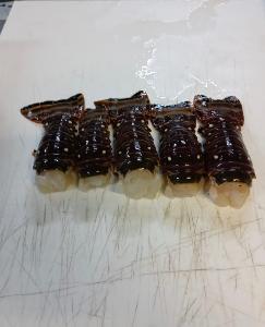 Свежие Карибские Колючие Хвосты омаров (Panulirus argus)