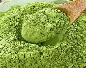 Green Tea Extract factoy price in bulk 40% Polyphenols