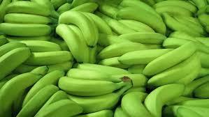 Cavendish Bananas for sale