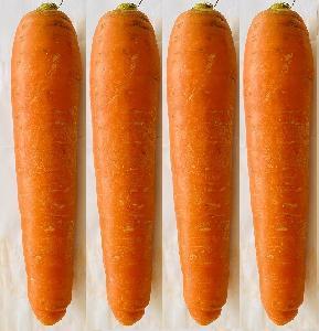 Fresh Carrots / Carrot