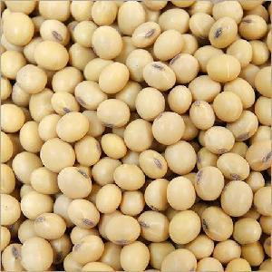 Non  GMO  Yellow  Soybean  Seeds