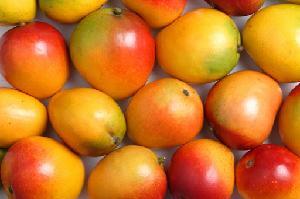 Fresh fruits / fresh mango / fresh banana