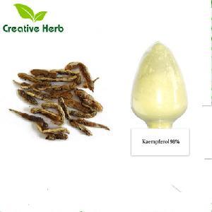 Factory supply sophora Japonica extract Kaempferol 30%,90%,98% powder Kaempferol 98% CAS NO.520-18-3