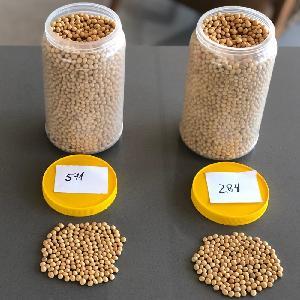 Non  Gmo   Soybean  (Food Type)
