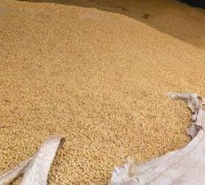 Yellow Grade 2 GMO Soybeans, 34% Protein Min, Fit for Human Consumption, Origin: (Brazil)