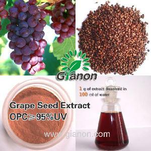 OPC Antioxidant Grape Seed Extract