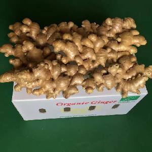 Fresh Organic Ginger For Sale