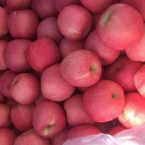high quality fresh Red Fuji Apple