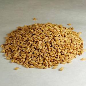 100% Organic long Wheat grain