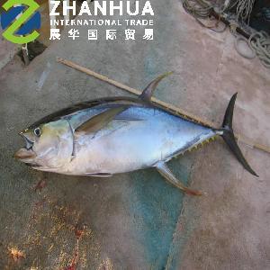Frozen Fish Yellowefin Tuna (Thunnus Albacares)