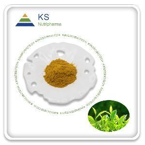 Green Tea Extract Powder 45% EGCG