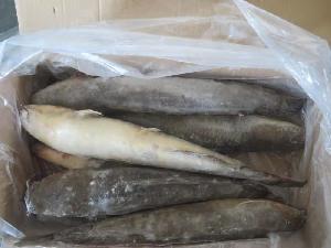 frozen catfish on sale/cat fish