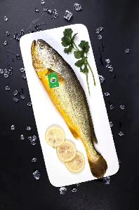 Frozen Yellow Croaker Fish High Quality Whole Round Frozen Fish
